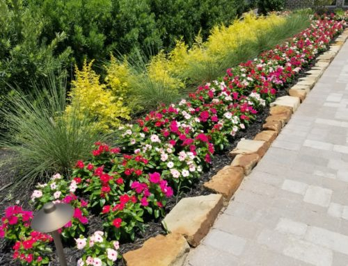 Spring Blooms for Your Landscape Design