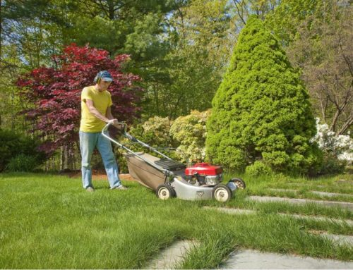 Why Get Professional Lawn Care Service for Dad?